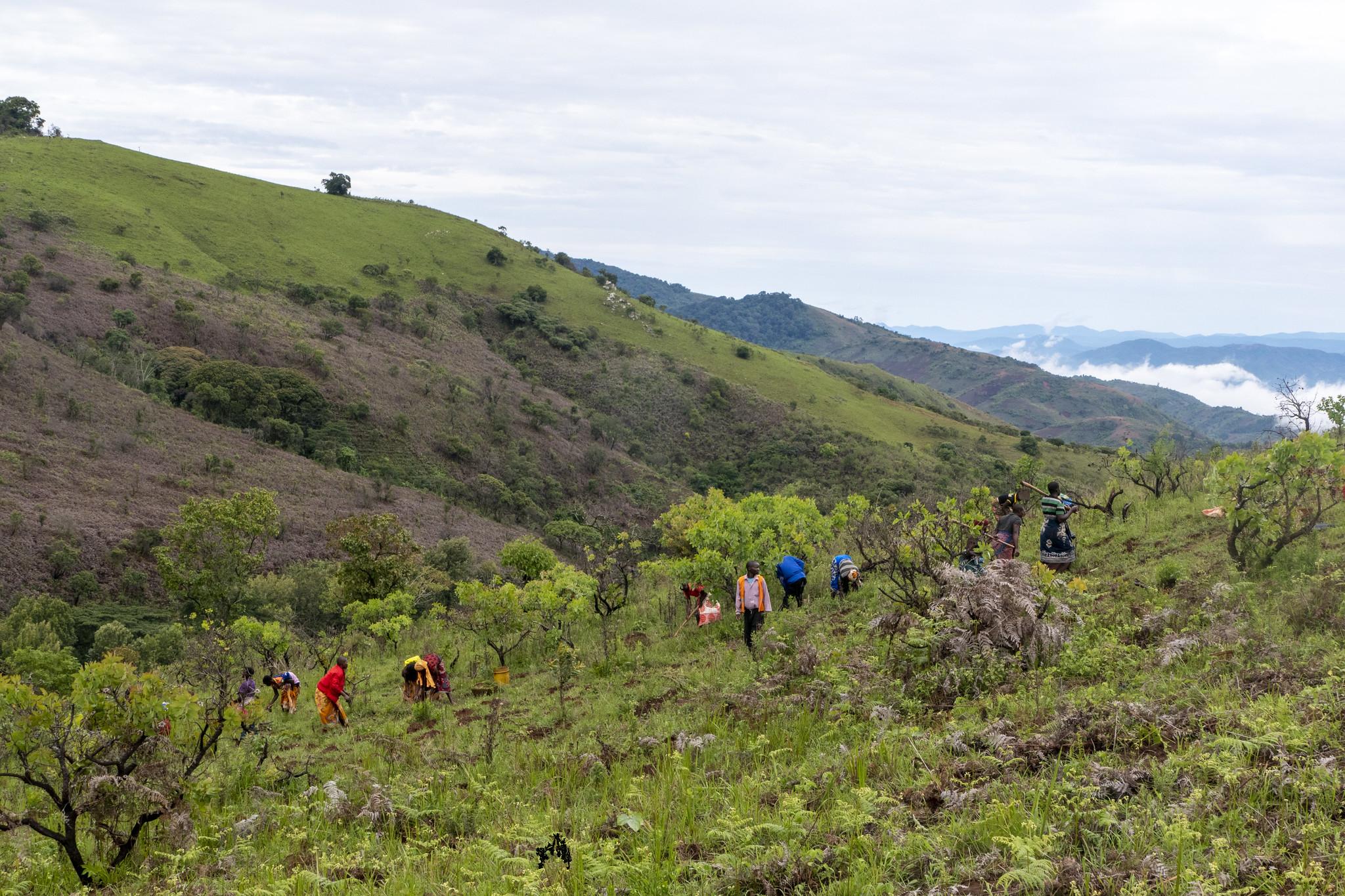 Misuku mountaintop restoration