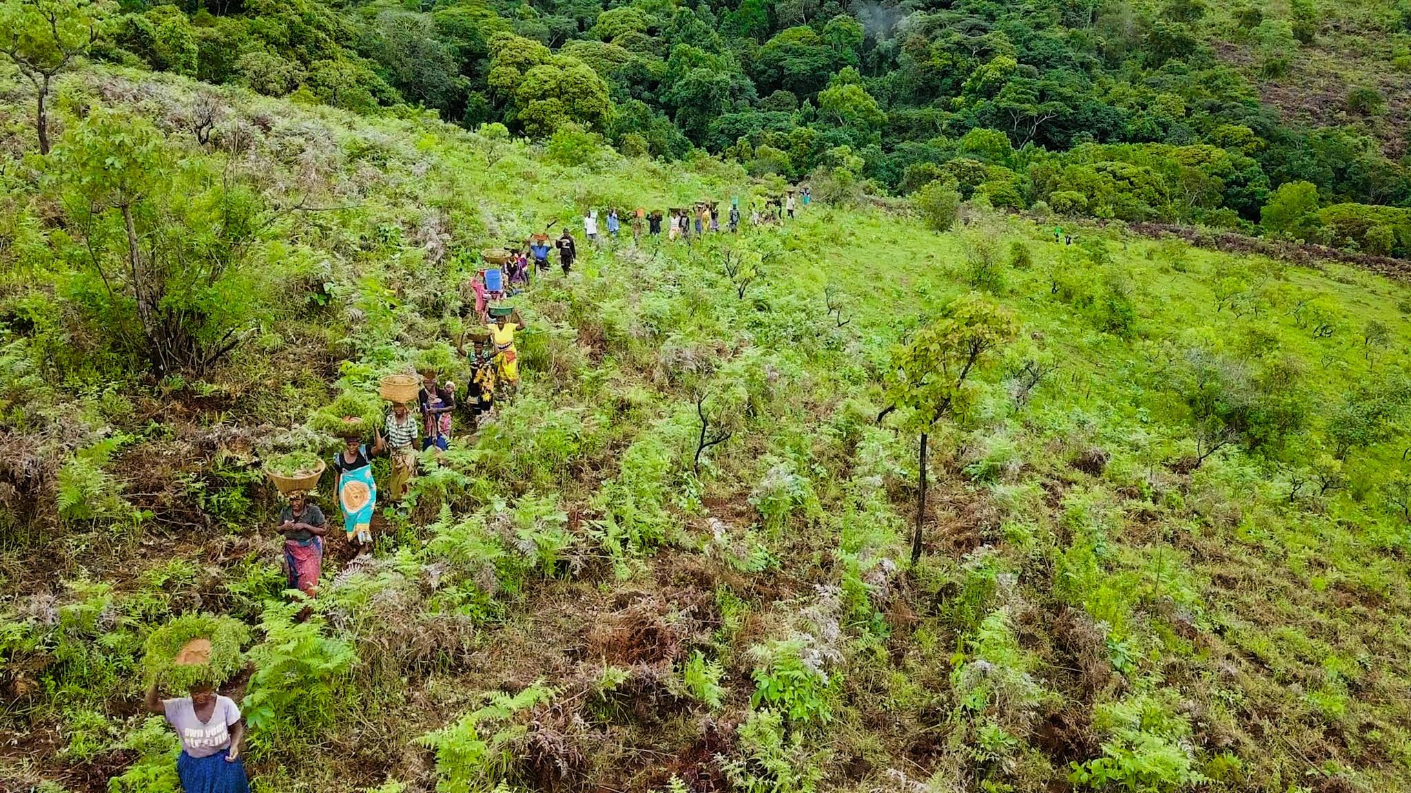 Misuku community forest 1
